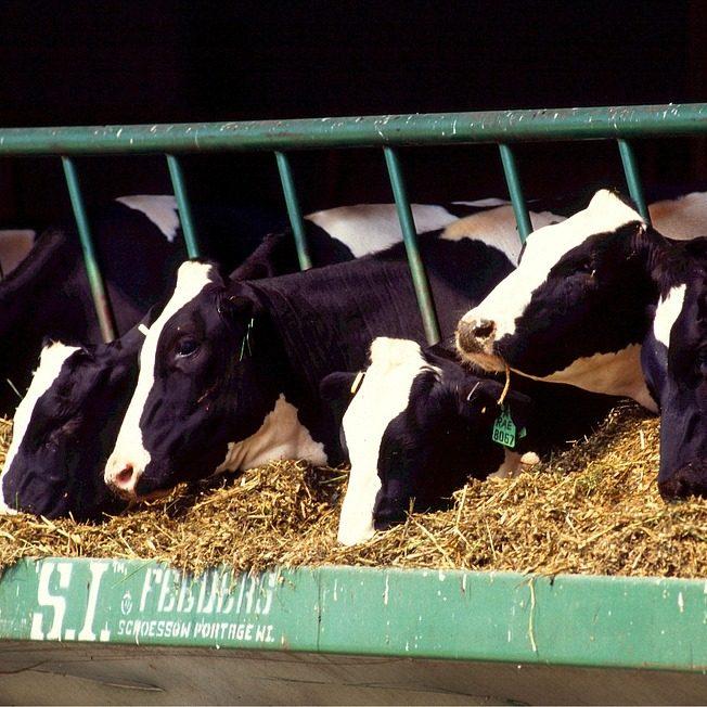 Methaan- en ammoniakmetingen in melkveestallen